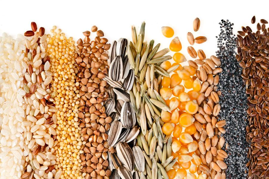 06075g-hacer-cuadros-semillas